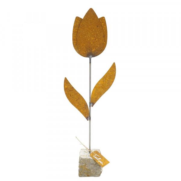 Edelrost Tulpe auf Stein
